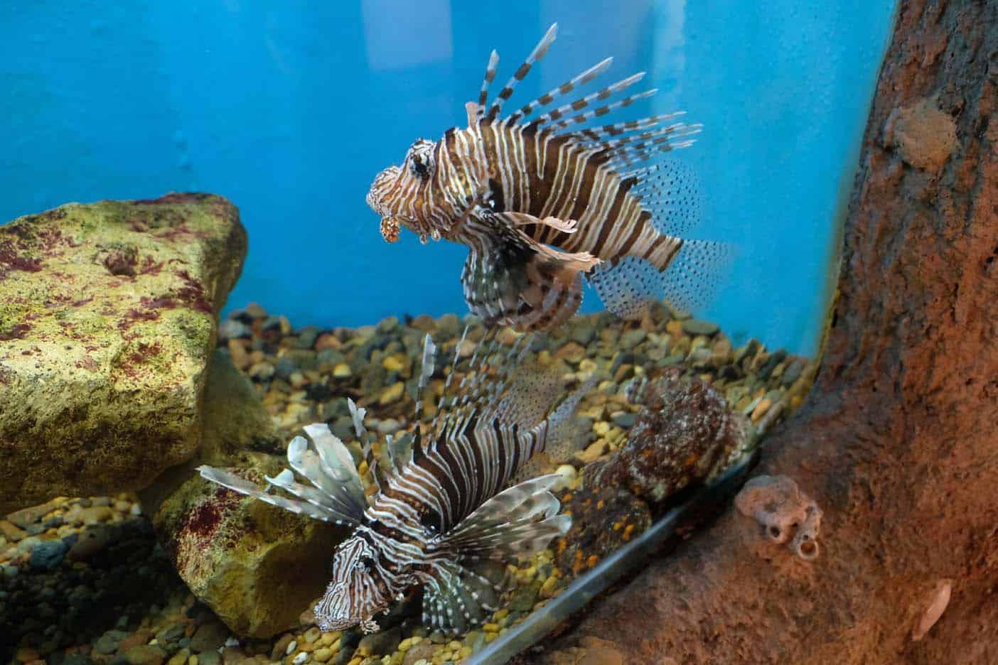 aquarium el gouna