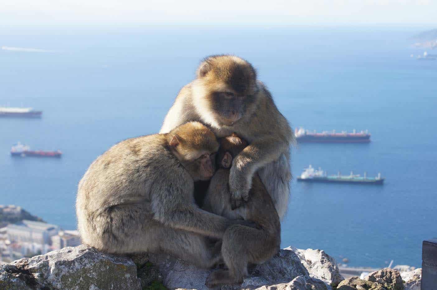 gibraltar met kinderen