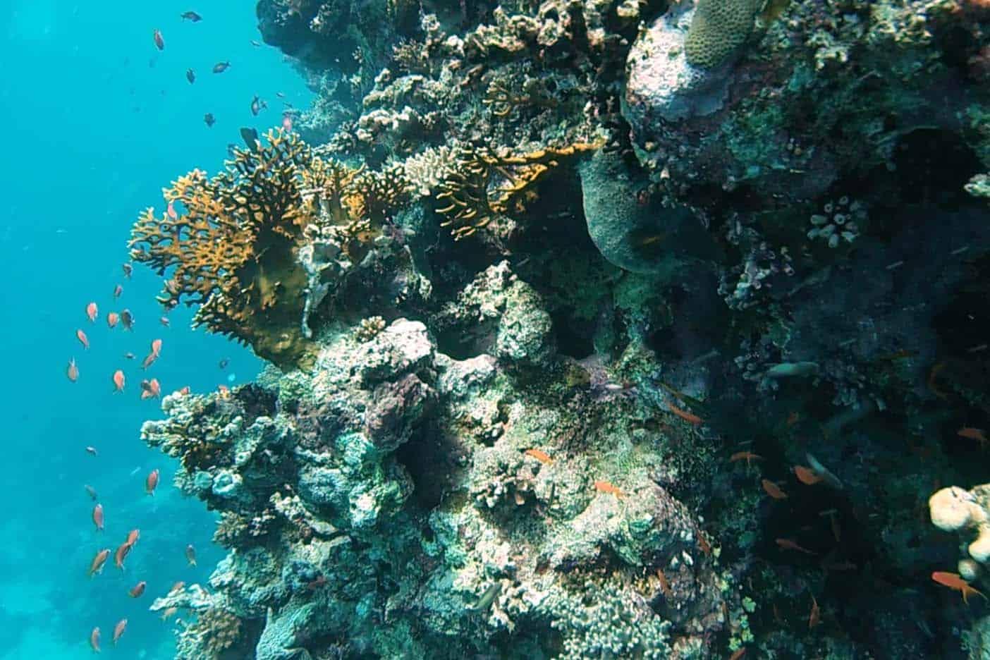 Snorkelen el gouna