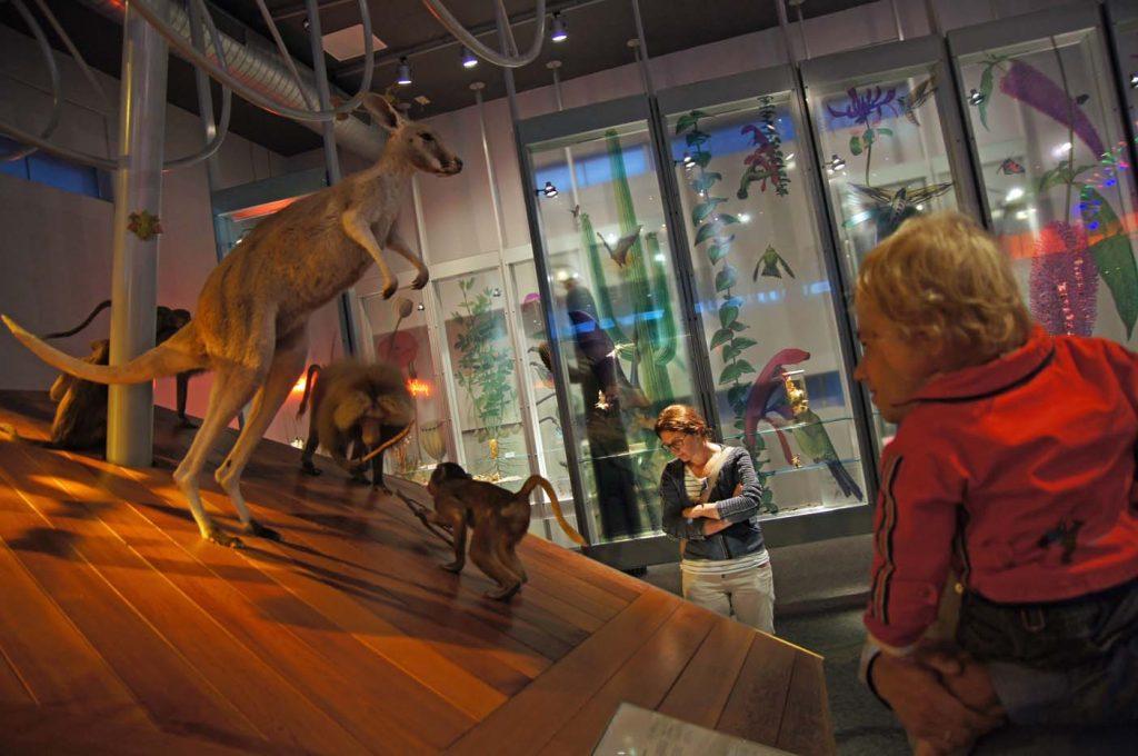 museum voor peuters