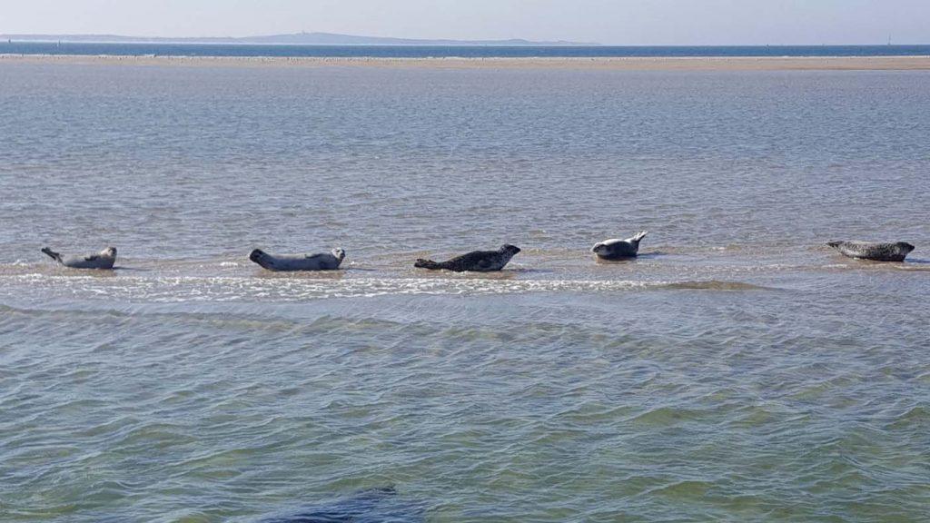 Te gek met kinderen: zeehonden spotten op een vissersboot