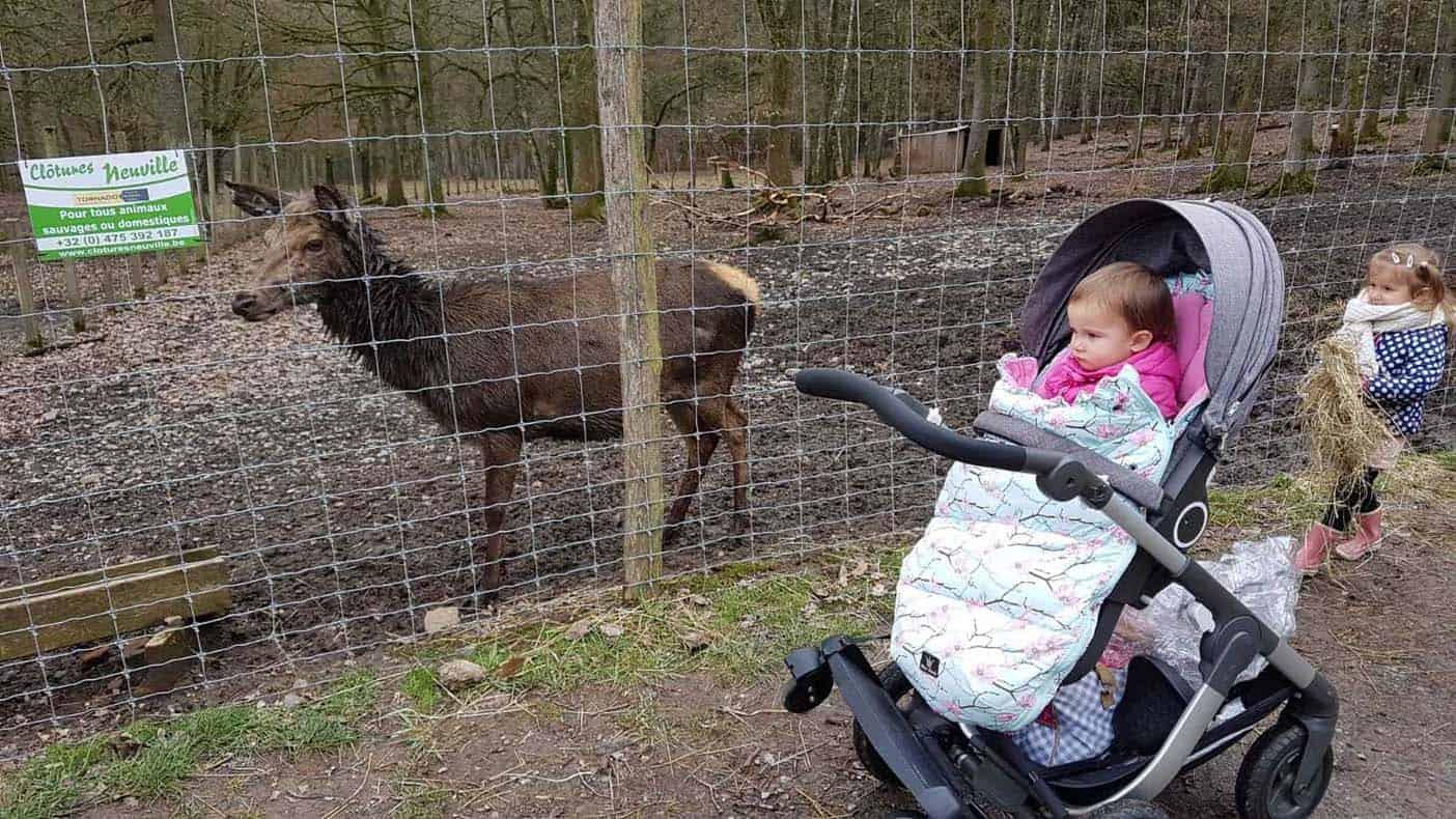 Ardennen met kinderen wildpark