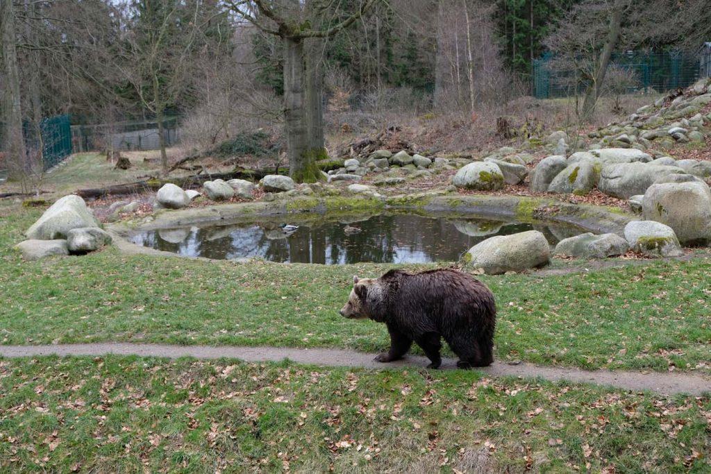 thale dierentuin