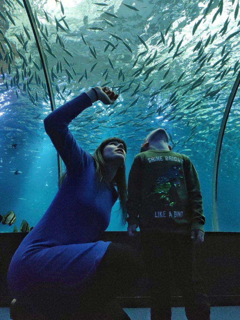 Nausicaa aquarium opaalkust