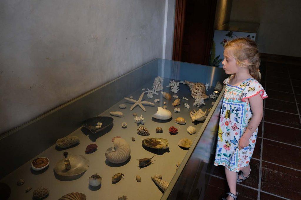 Celje regionaal museum