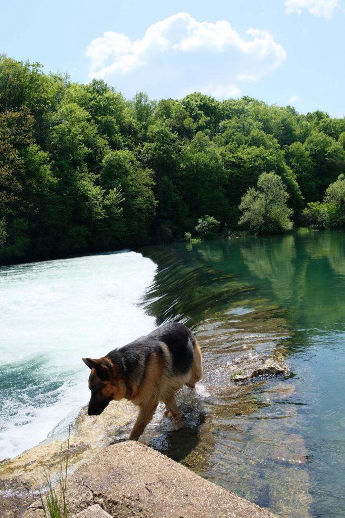dobra rivier