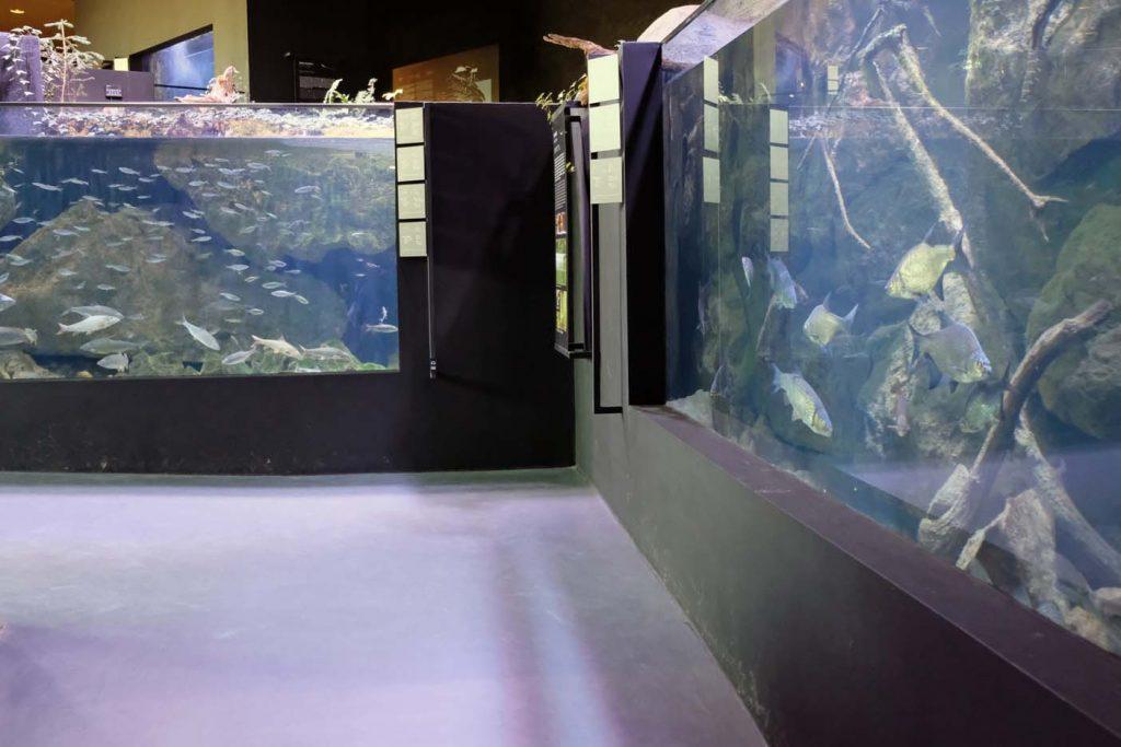 Karlovac aquatika