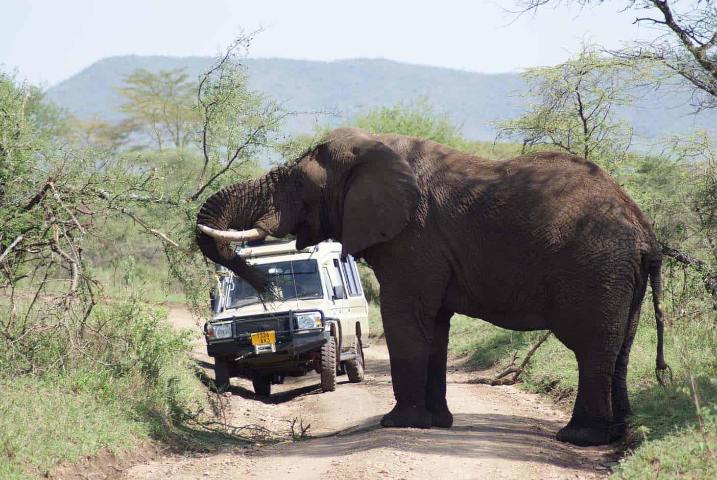 Safari tanzania met kinderen