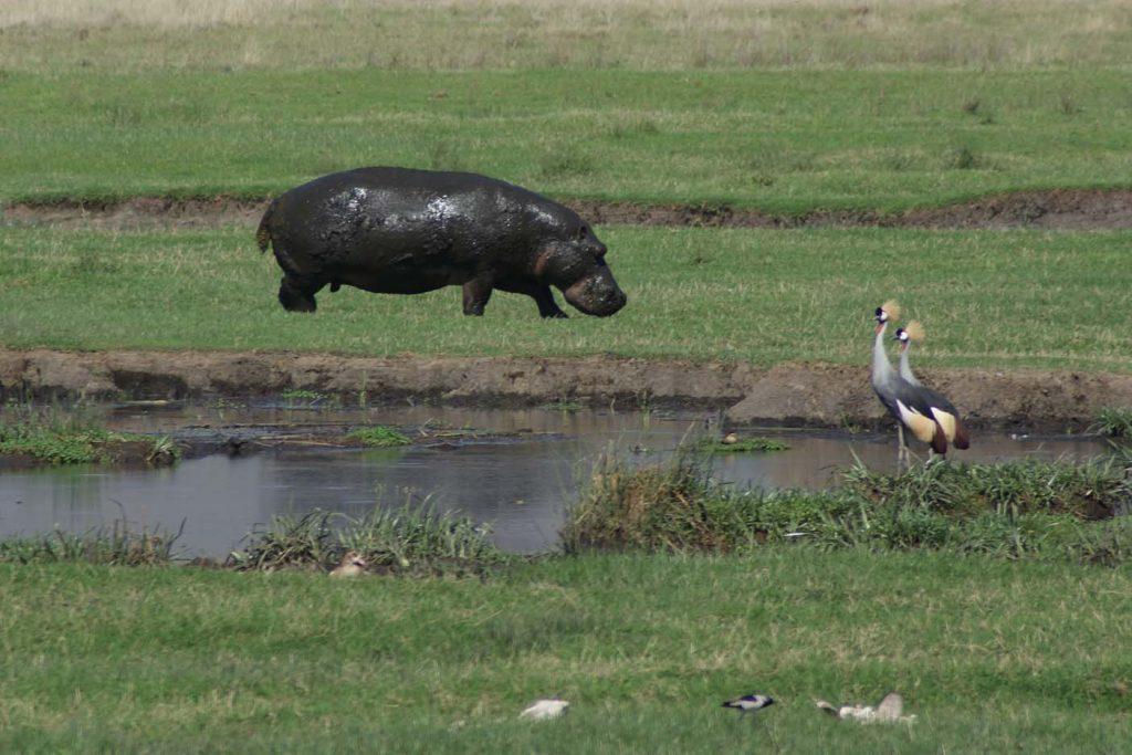 tanzania naiotnaal park