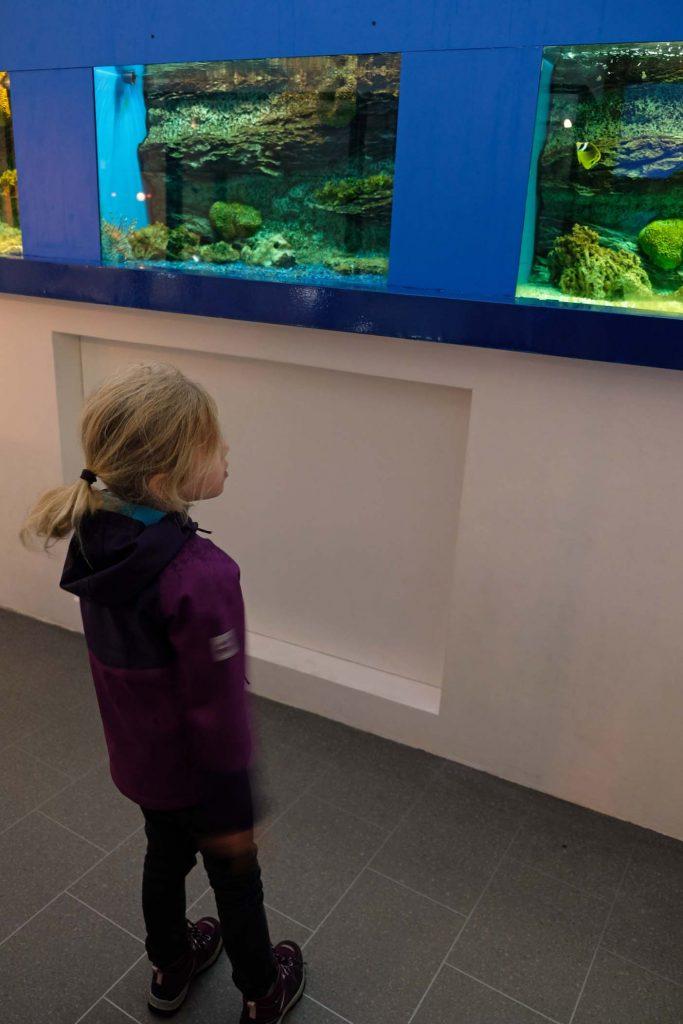 Krkr met kinderen aquarium