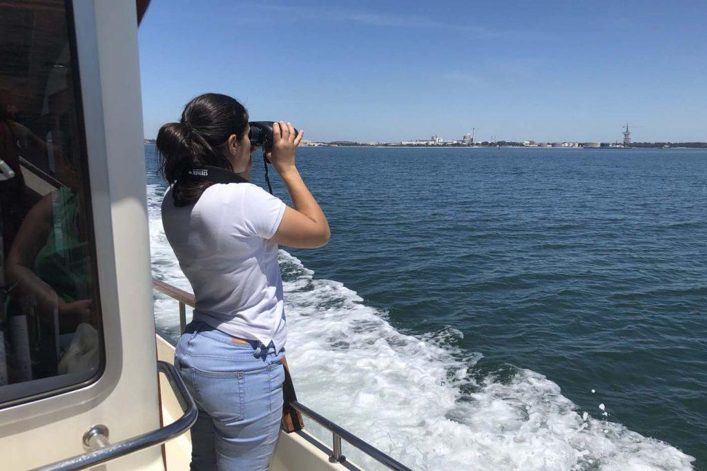 Dolfijnen kijken op de Sado