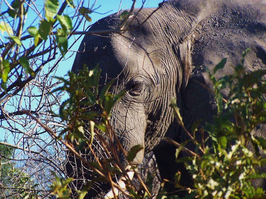 Okavangodelta_
