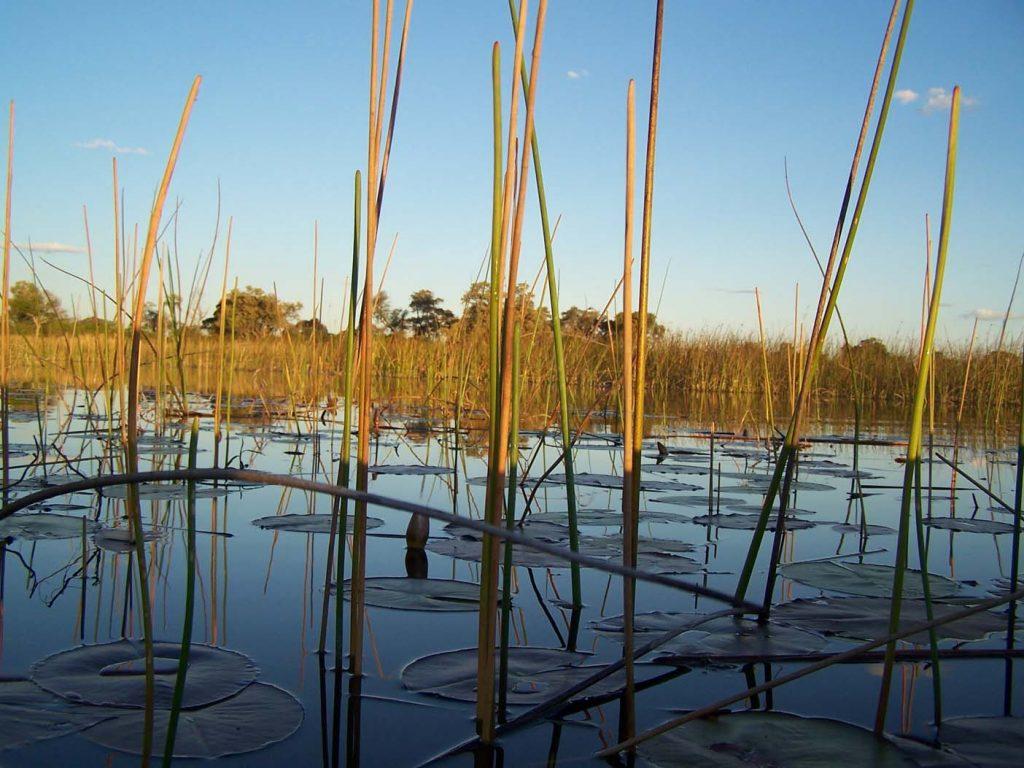 Okavangodelta mokorotrip