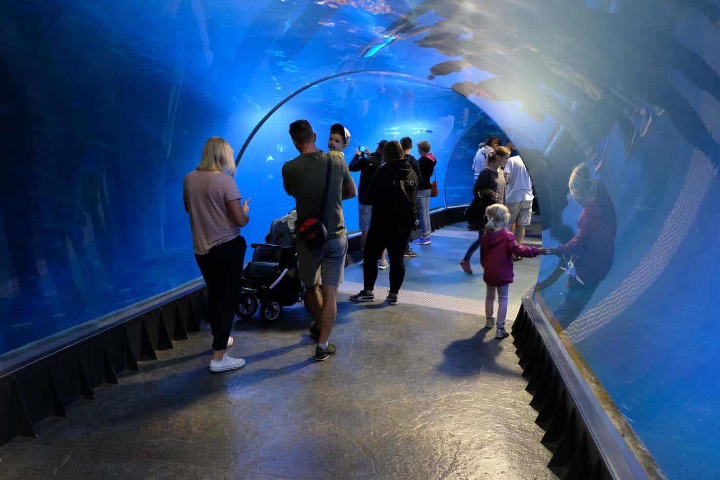 Wroclaw met kinderen dierentuin