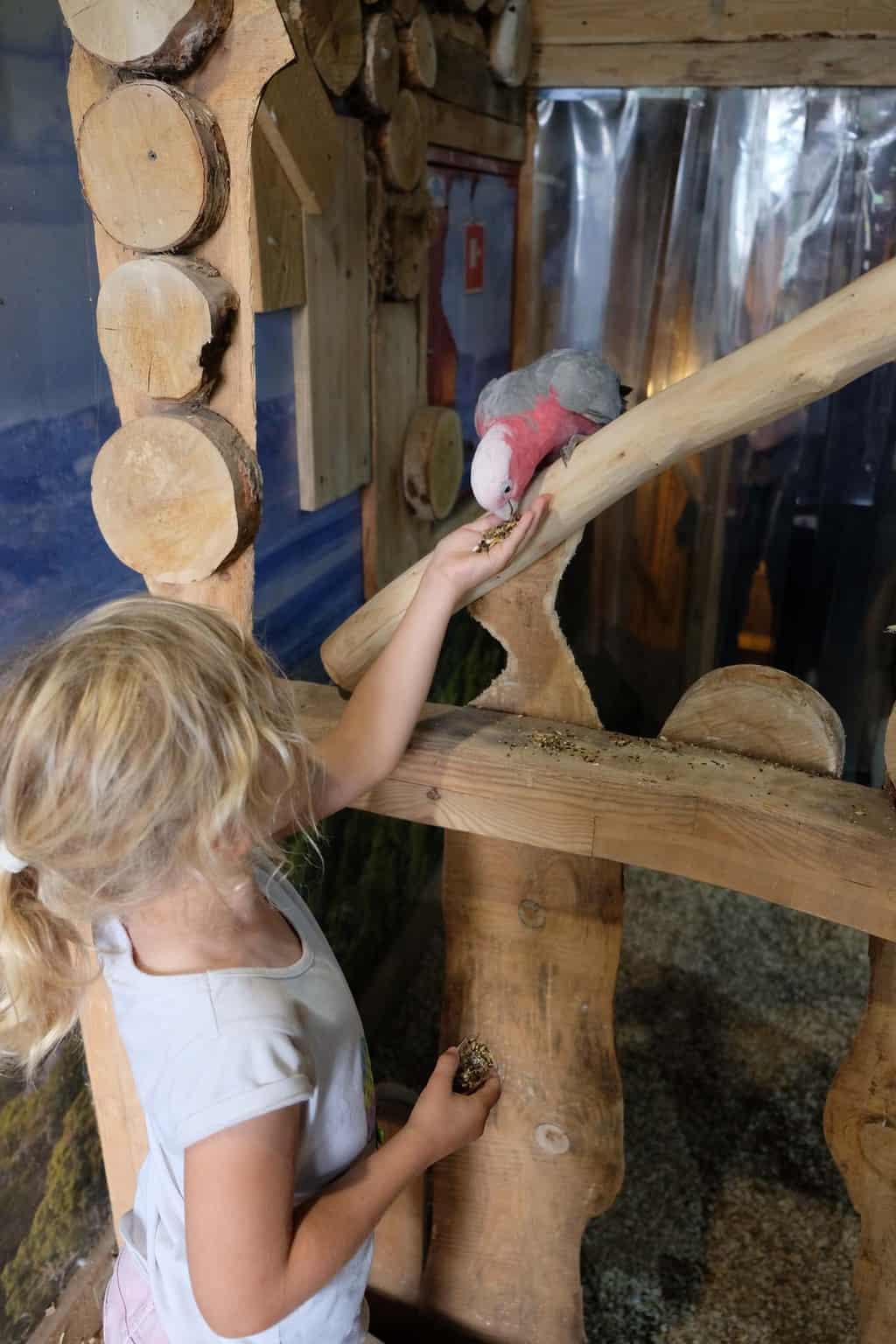 wroclaw met kinderen parrot house