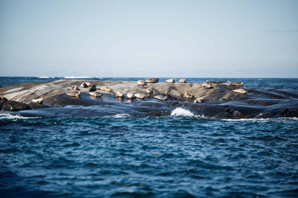 Kosterhavet National Park in Zweden,