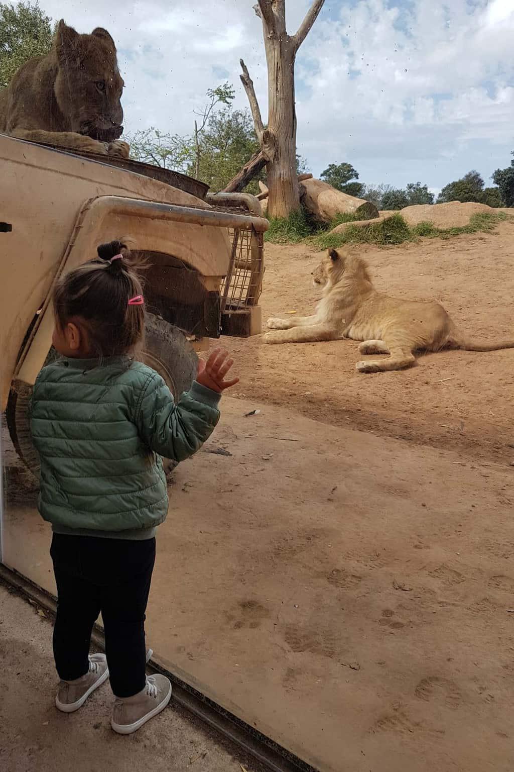 Melbourne met kinderen dierentuin