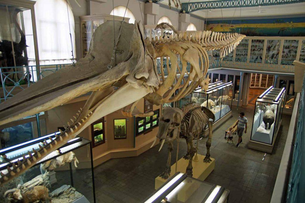 Natuurhistorische museum