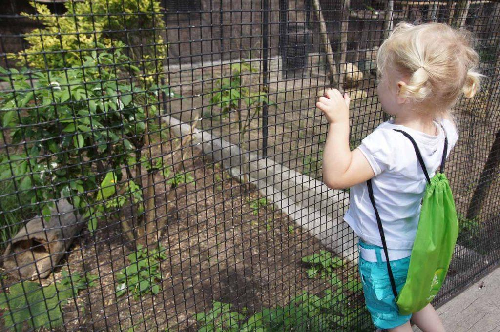 De dierentuin in Lille