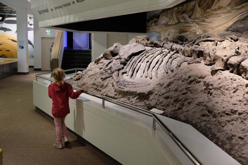Natuurhistorische museum Lübeck