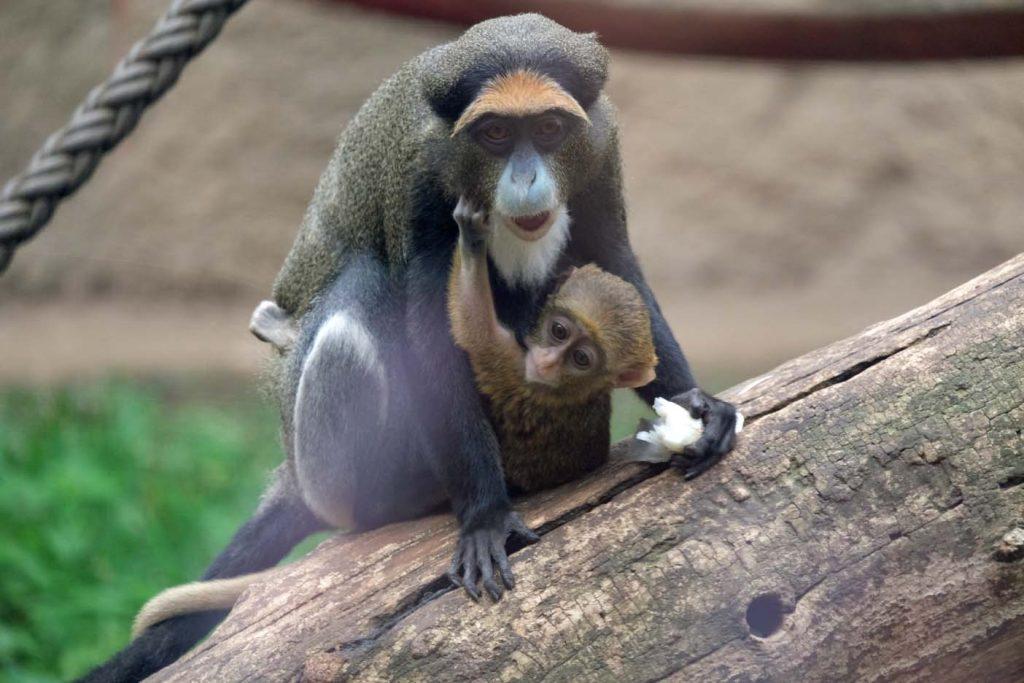 Rostock dierentuin