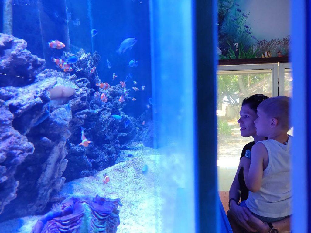 Manukan island aquarium