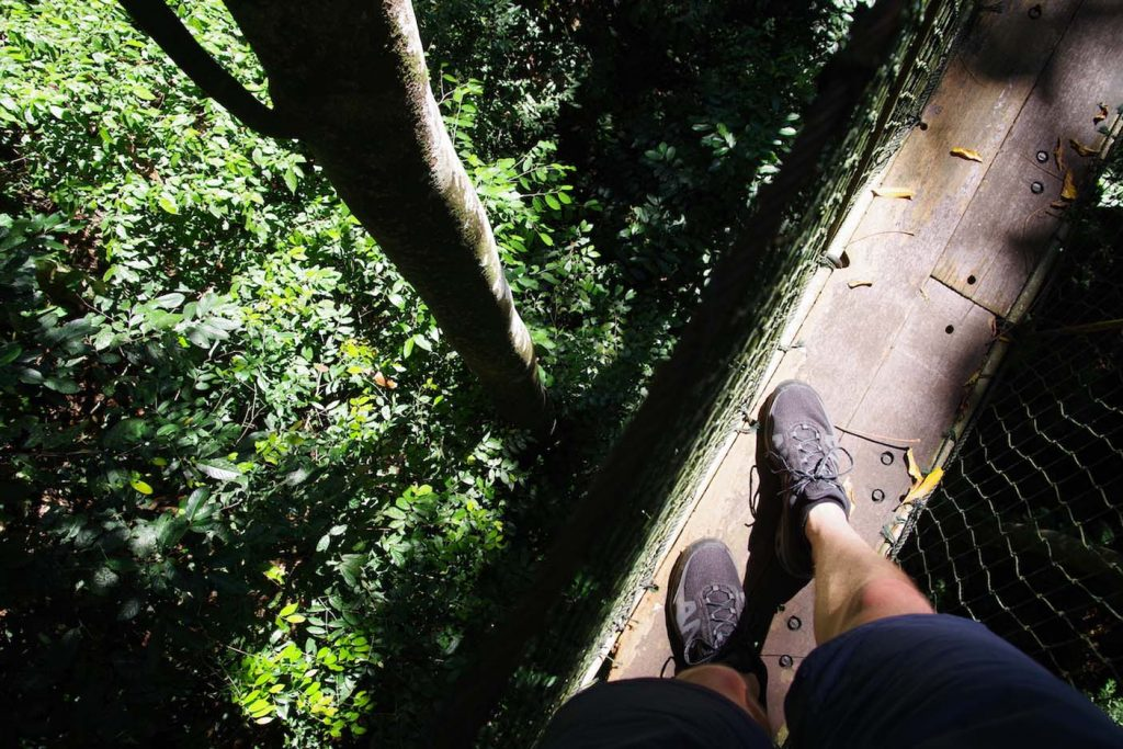 mulu nationaal park canopy walk