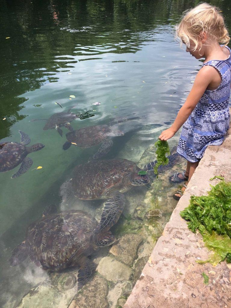 Nungwi schildpadden