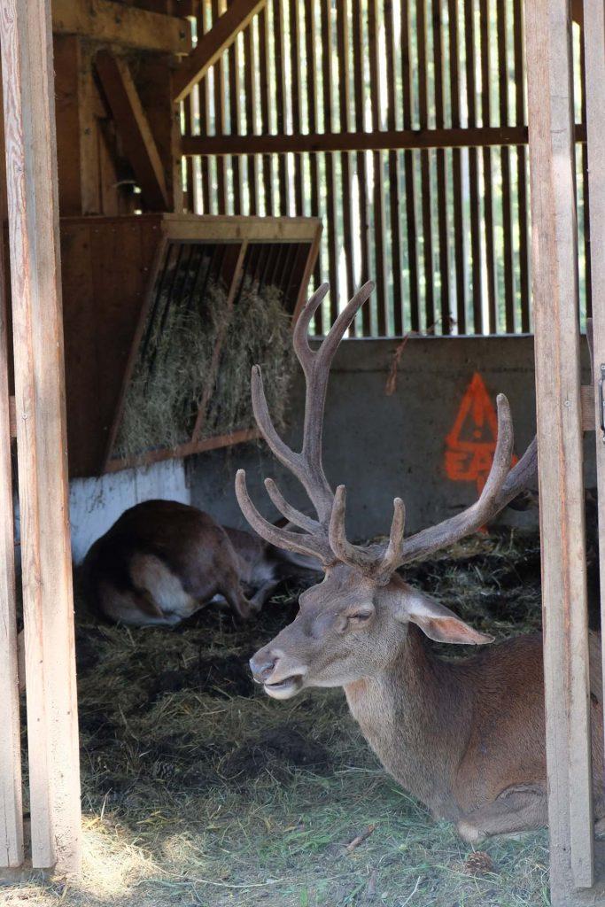 Parc Animalier de la Grande Jeanne
