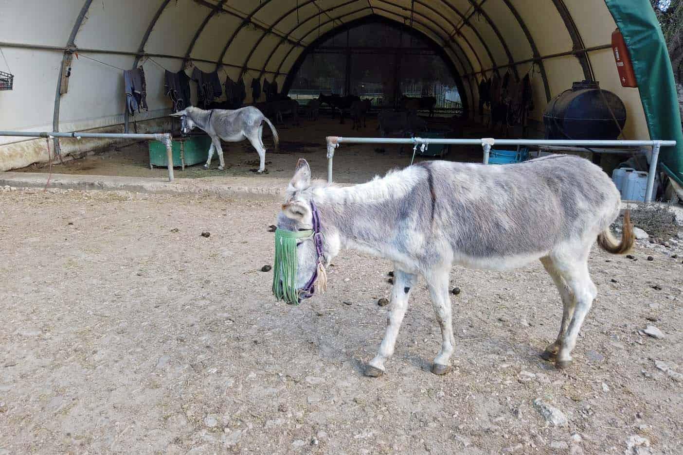 corfu met kinderen ezelopvang