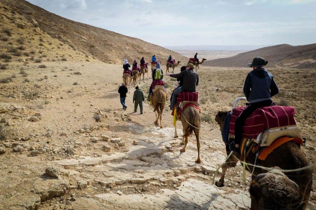 Camel ranch israel