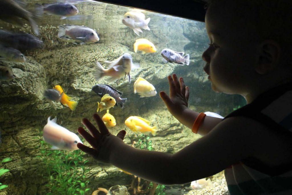 Krk aquarium