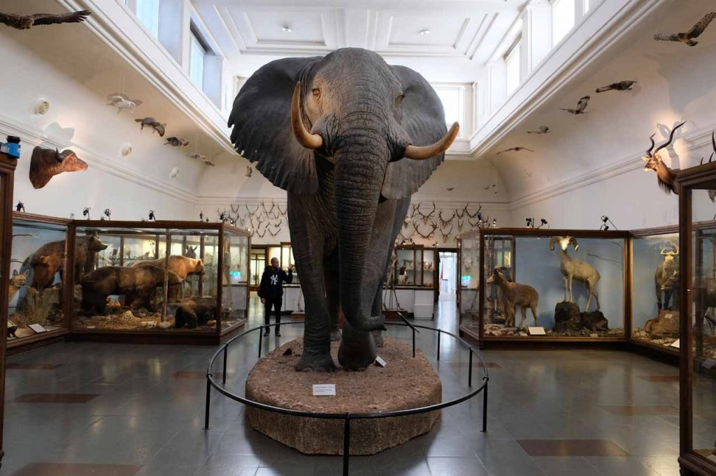 gotenburg natuurhistorisch museum