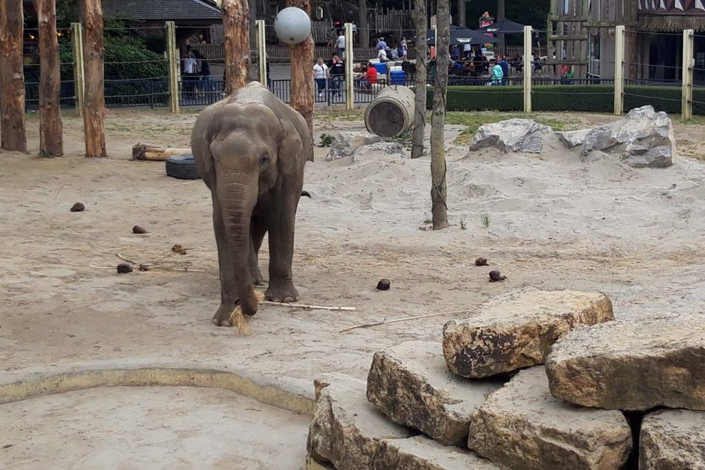 Bellewaerde dierentuin