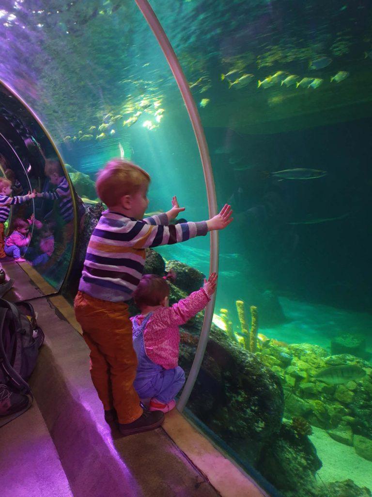 Sea Life Oberhausen tunnel