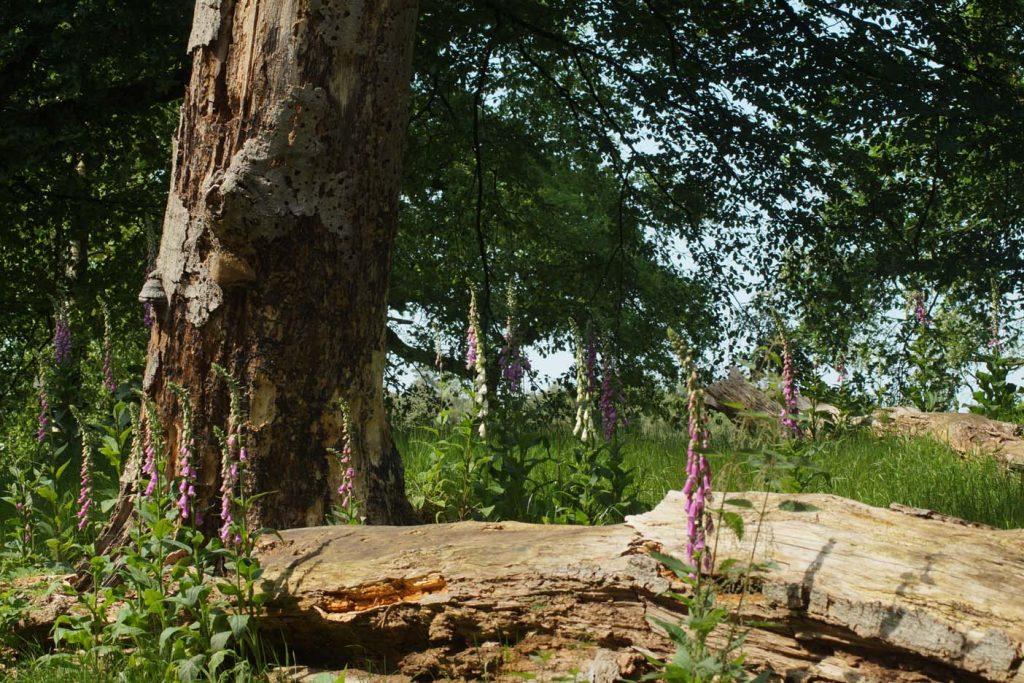 apeldoorn bos