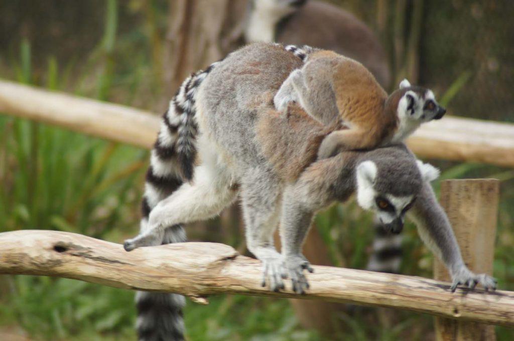 dierentuin belgie planckendael