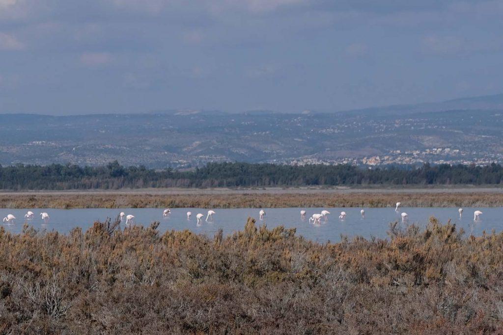flamingo's cyprus