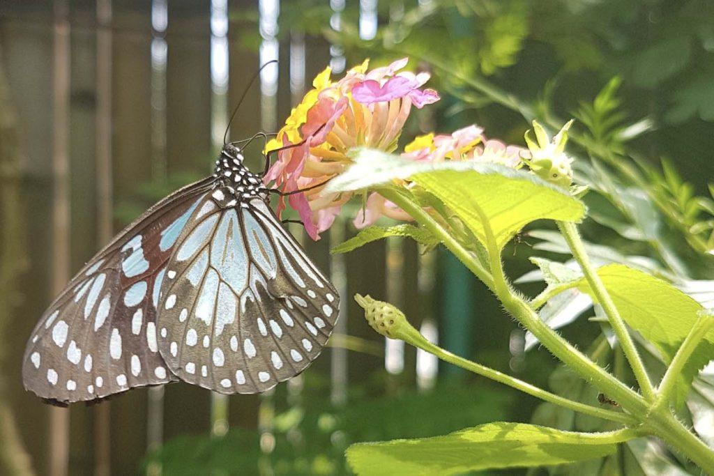 vlindertuin bohol