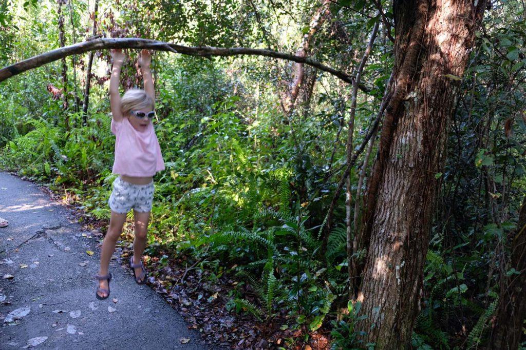 everglades Gumbo Limbo Trail