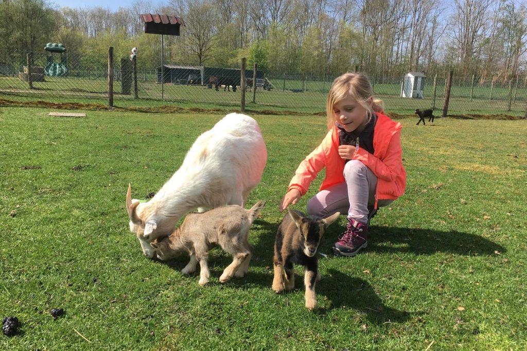 Beleefboerderij de kleine carrousel