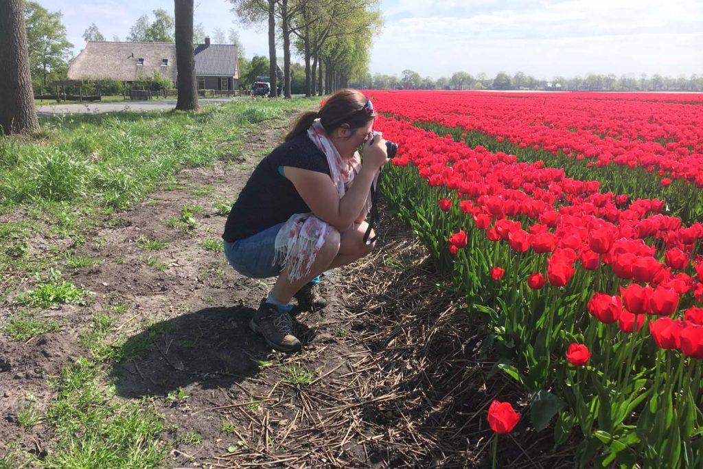 Drenthe bloemenveld