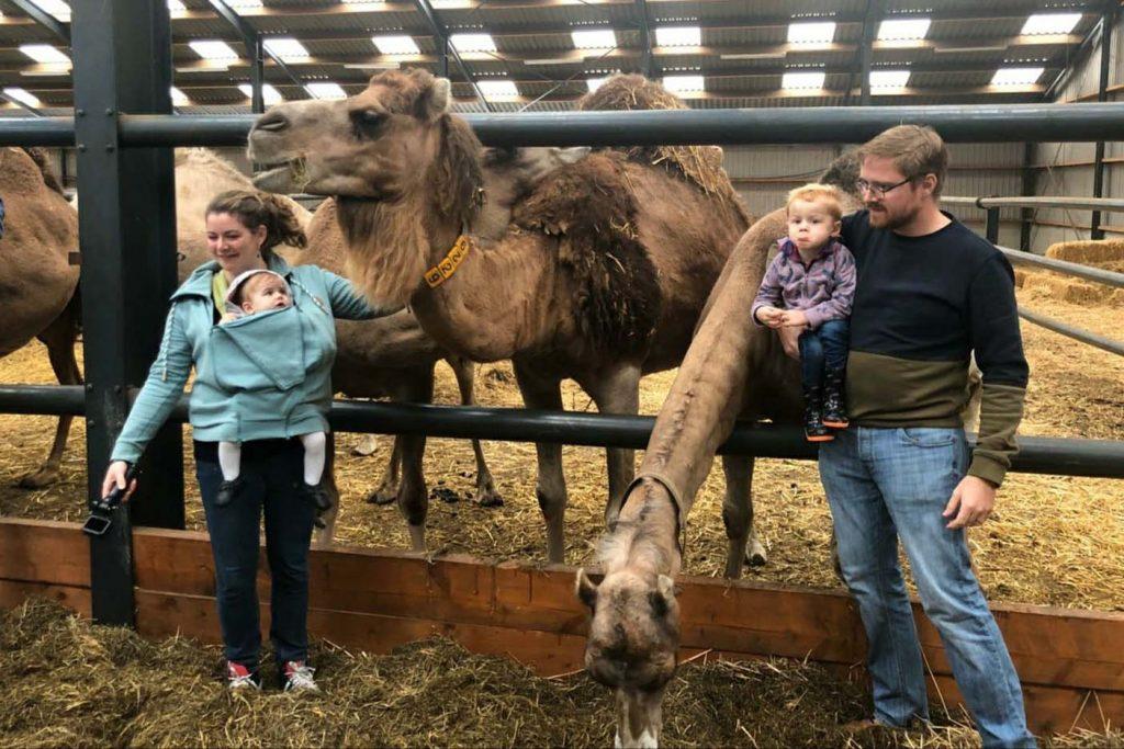 kamelenboerderij