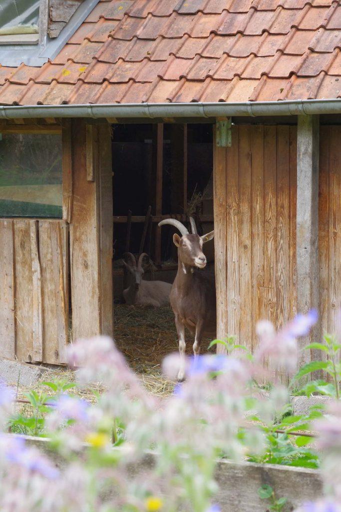 geitenboerderij La Halte d'Autrefois in Hesmond