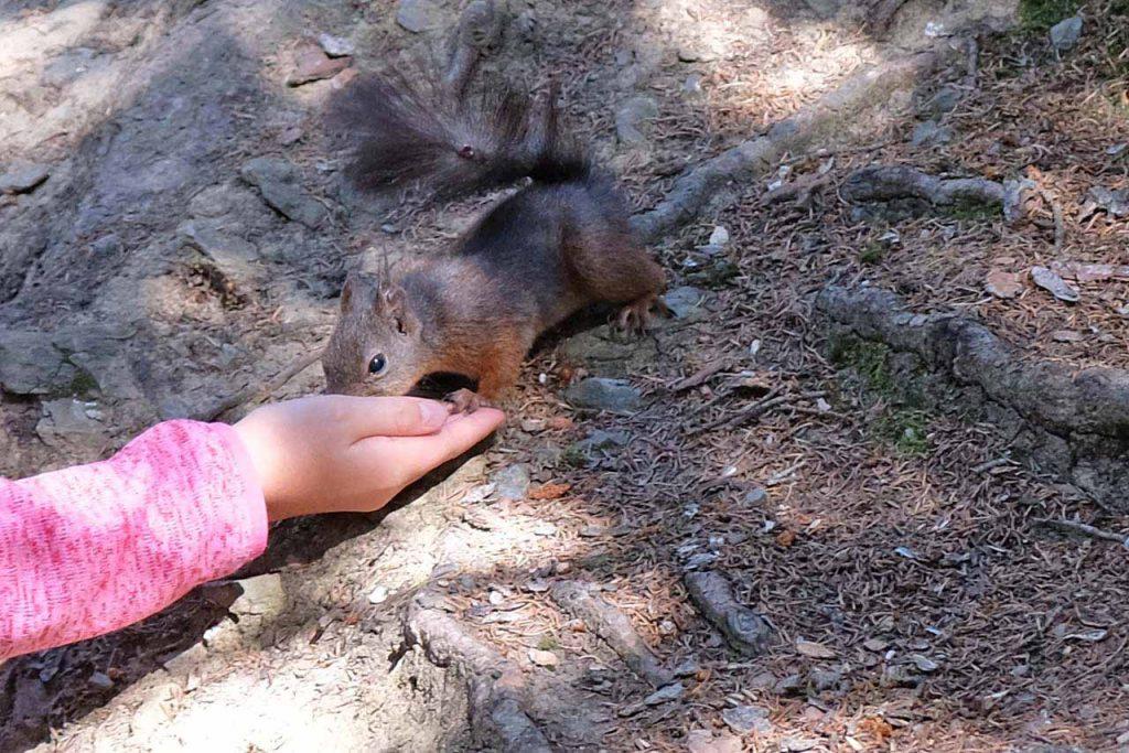 eekhoorntjespad crans-montana