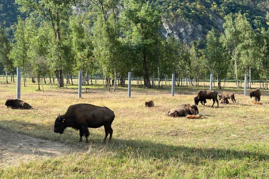bizon farm van boer Didier