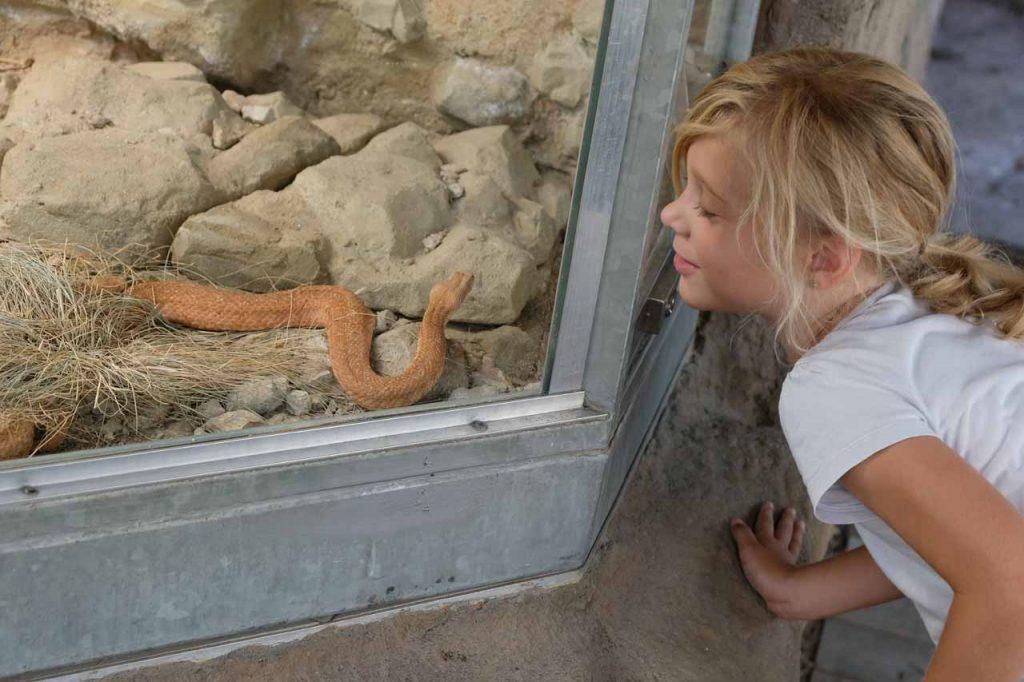 dierentuin hluboka