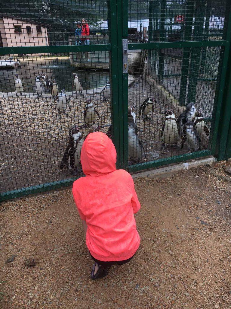 Pilsen dierentuin