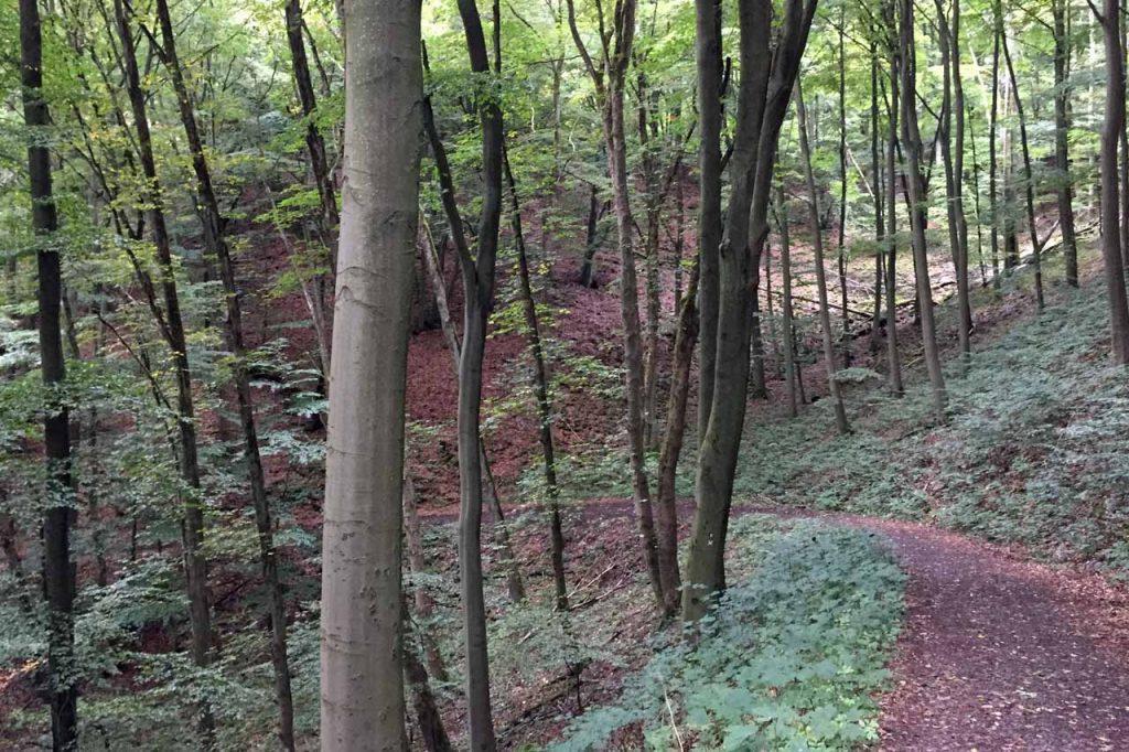 Wandelen in het Kellerwald