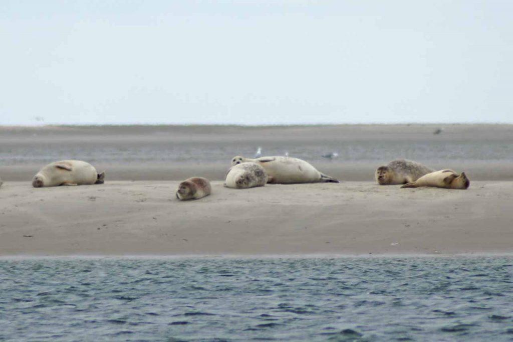Zeehonden safari Denemarken
